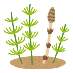 plant_sugina_tsukushi
